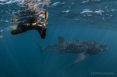 whaleshark Ningaloo reef